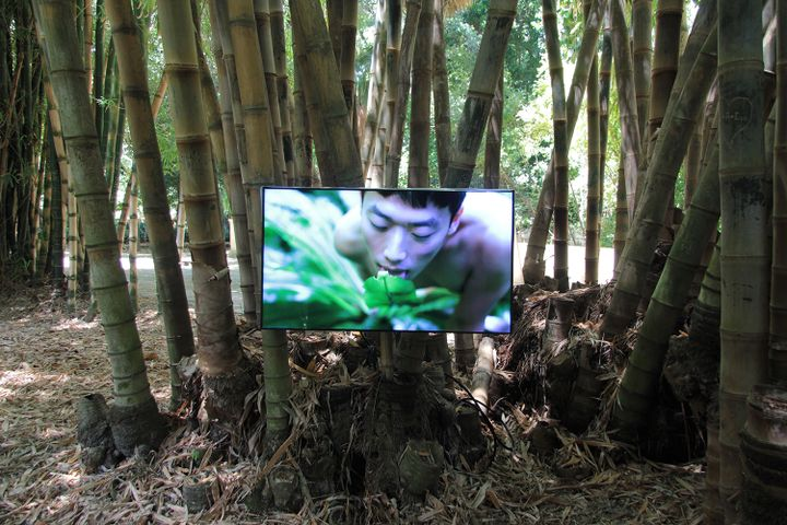 Zheng Bo, Pteridophilia 2 (2018). Video. Exhibition view: The Planetary Garden. Cultivating Coexistence, Manifesta 12, Palermo (16 June–4 November 2018). Courtesy the artist and Manifesta 12. Photo: Wolfgang Träger.