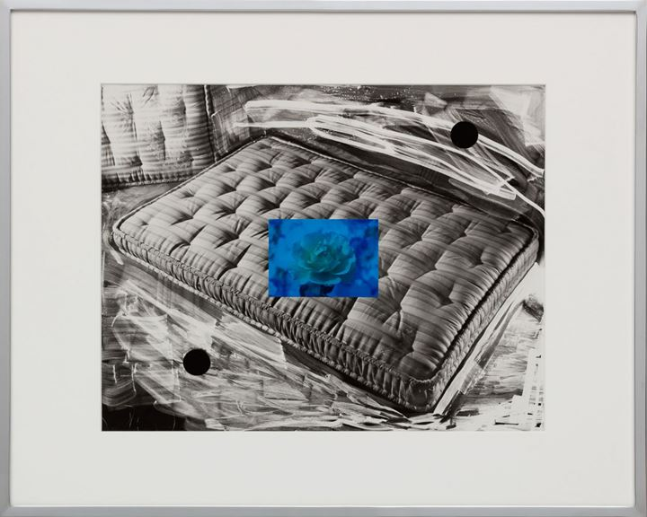 Elad Lassry, Untitled (Carpet, Coral Hawkfish) (2019). Silver gelatin print, offset print on paper, stainless steel, walnut frame. 28.6 x 36.2 x 5.1 cm. Courtesy 303 Gallery.