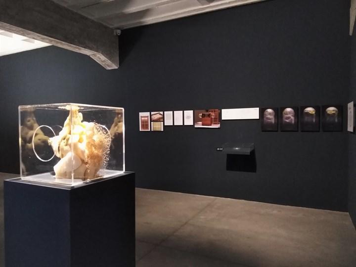 Ren Ri, Yuansu II (2013); Vivian Xu, The Silkworm Project (2014–2019) (left to right). Exhibition view: Quasi-Nature—Bio Art, Borderline and Laboratory (22 March–16 June 2019).