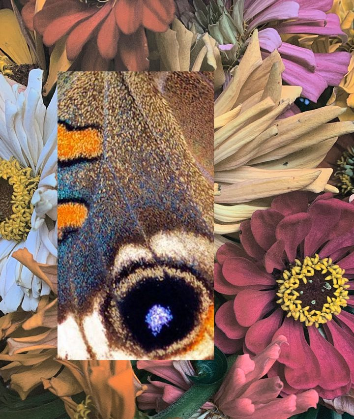 Closely cropped imagery of flowers is overlaid with an image of a butterfly's wing.