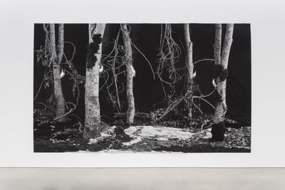 A collection of trees in a black and white photograph stand around an ashen floor. One of the trees is burnt at the middle.