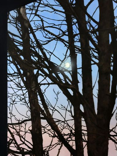 A cluster of trees sprawl across a light pink and blue sky. A luminescent moon glows from behind the trees' branches.