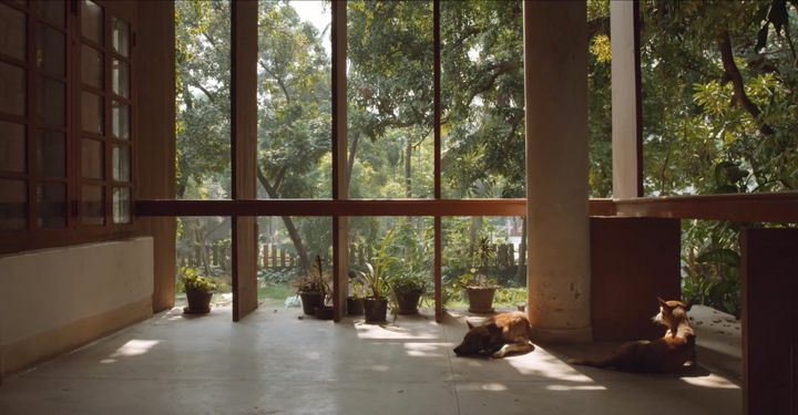 A still from a video captures a patio, upon which stray dogs are sitting, overlooking a tropical garden.