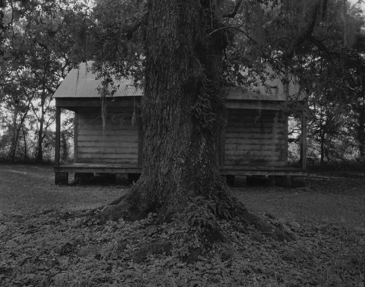 A black and white photograph of a wooden home is concealed in part by a lichen-covered tree that stands in front of it.