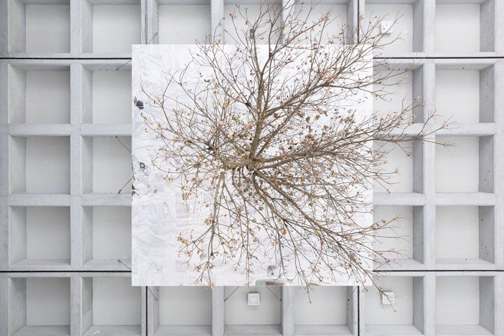 Henrik Håkansson, Inverted Tree (Reflected) (2018). Elaeocarpus sylvestris, steel, mirror glass, stainless steel, steel wire, wooden panel, hygrometer, irrigation system, misting system. Dimensions variable. Exhibition view: Post-Nature—A Museum as an Ecosystem, the 11th Taipei Biennial, Taipei Fine Arts Museum (17 November 2018–10 March 2019). Courtesy © the artist and Taipei Fine Arts Museum.