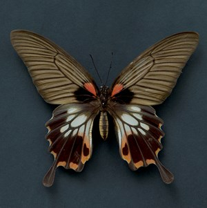 Butterfly #11 by Krisada Suvichakonpong contemporary artwork