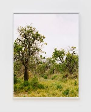 Orange grove #5 by Roe Ethridge contemporary artwork