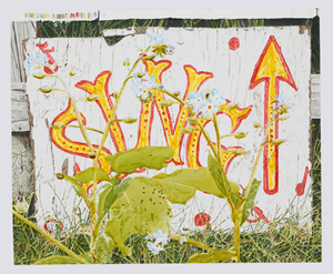 Sing Sign (w/ Big Forget-Me-Nots) by Dave Muller contemporary artwork