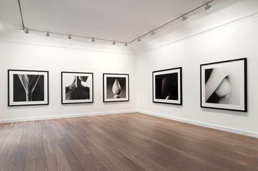 Jean-Baptiste Huynh, 'Nus & Végétaux' 2016, Exhibition view, Galerie Lelong, Paris. Courtesy Galerie Lelong, Paris.
