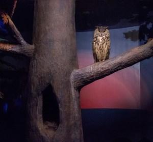 Owl and dusky light by Eric Pillot contemporary artwork