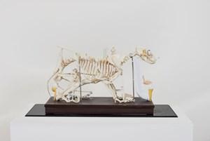 Splash and Flakes( Skeleton/2017 ) #5 飛濺與薄片(人骨架/2017)#5 by Teppei Kaneuji contemporary artwork