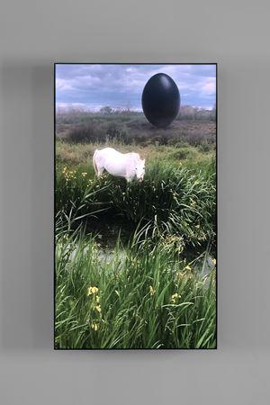 Camargue Horse by Rachel Rose contemporary artwork sculpture, moving image