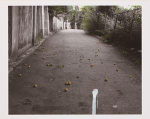 The House - Apricot by Honggoo Kang contemporary artwork