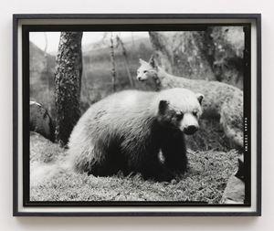 Sixteenth beast by Gerard Byrne contemporary artwork