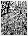 SNOW FOREST 002A by Farhad Moshiri contemporary artwork 1
