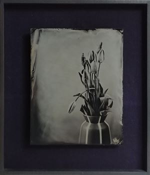 Tulpen by Steffen Diemer contemporary artwork