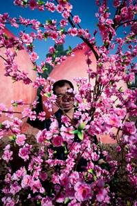 Peach Blossom 桃 by Feng Li contemporary artwork photography