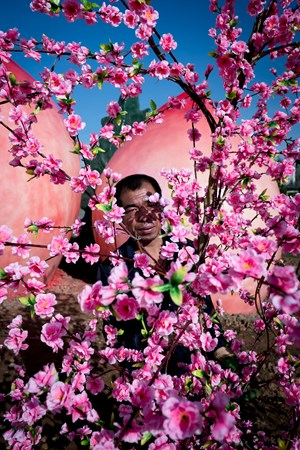 Peach Blossom 桃 by Feng Li contemporary artwork