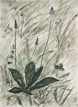Plantago Asiatica III by Lin Chuan-Chu contemporary artwork