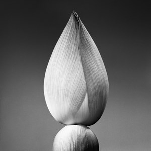 Inde - Lotus by Jean-Baptiste Huynh contemporary artwork