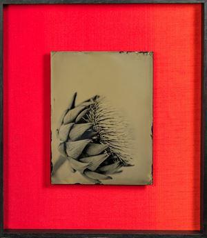 untitled (artichoke) by Steffen Diemer contemporary artwork