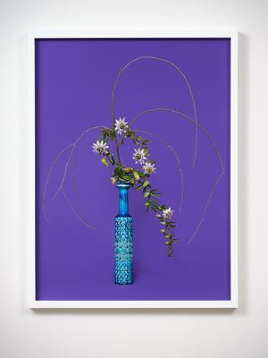 The Justice, Willow (Salicaceae sp.) by Ann Shelton contemporary artwork