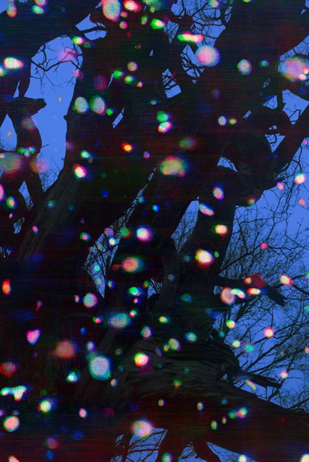 Trees and Snow V by Tim Maguire contemporary artwork