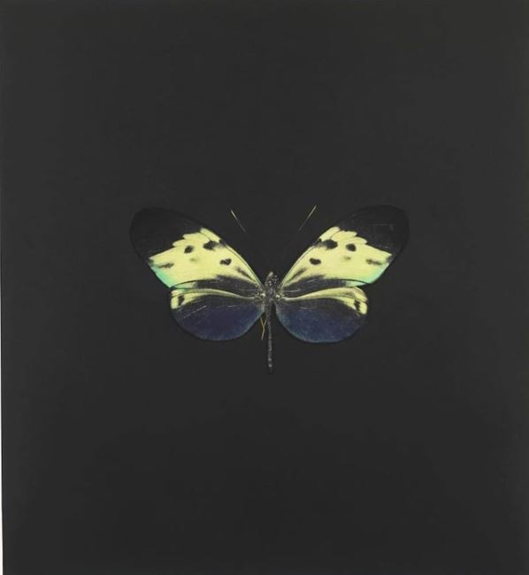 The Souls on Jacob's Ladder IV by Damien Hirst contemporary artwork