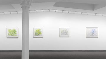 Contemporary art exhibition, Sylvia Plimack Mangold, The Pin Oak, 1985–2015 at Krakow Witkin Gallery, Boston