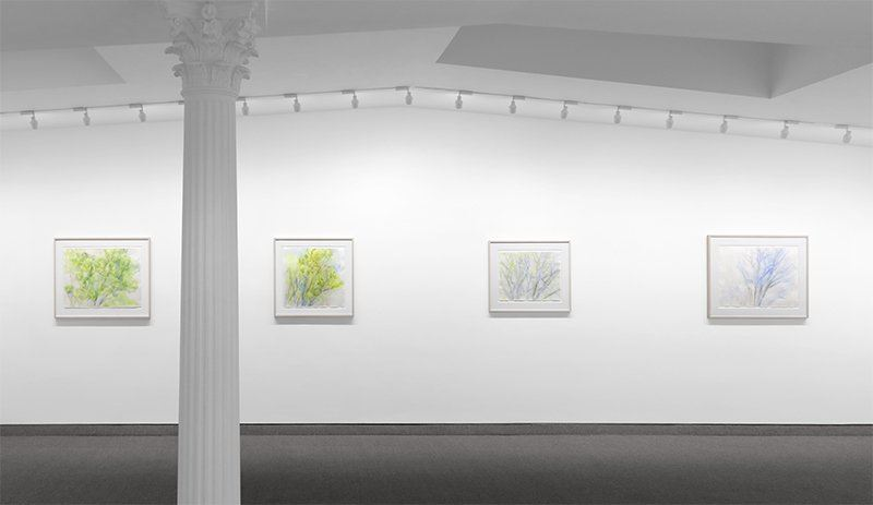 Exhibition view: Sylvia Plimack Mangold, The Pin Oak, 1985–2015, Krakow Witkin Gallery (17 January–18 March 2021). Courtesy Krakow Witkin Gallery, Boston.
