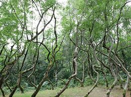 'Wood suits me, I'm a Saxon!' – an interview with David Nash