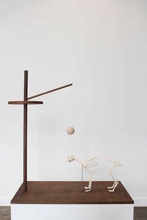 Memorial to the Last Cat on Christmas Island by Robert Zhao Renhui contemporary artwork