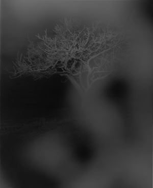 it is as it is by Kazuna Taguchi contemporary artwork