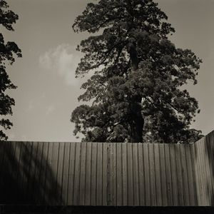 Ise by Keiichi Ito contemporary artwork works on paper, photography