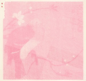 Bright Pink Big Bird (A) 桃色大鳥A by Nan Qi contemporary artwork