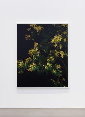 Mimosa (Actor) (I) by Sarah Jones contemporary artwork photography