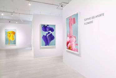 Exhibition view: Sophie Delaporte, Flowers,Sous Les Etoiles Gallery, New York (15 April–15 May 2021). Courtesy Sous Les Etoiles Gallery.