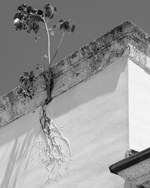 Painted Roots by Anastasia Samoylova contemporary artwork