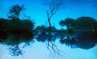 Treety by Nadia Khawaja contemporary artwork moving image