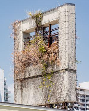 Plants in South Beach by Anastasia Samoylova contemporary artwork