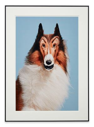 Reconstructed Lassie by John Waters contemporary artwork