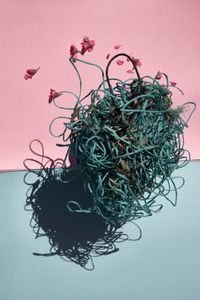 beehive by Thirza Schaap contemporary artwork photography