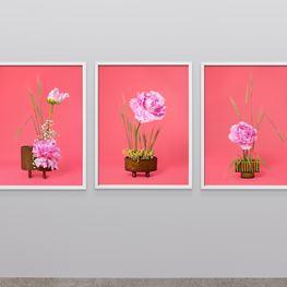Ann Shelton contemporary artist