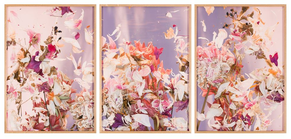 André Hemer, Sky scans (Peonies/Vienna, June 4, 18:25–18:35 CEST) (2020). C-print on Fuji Flex with Oak frame (3 parts). Edition of 1 + AP. Courtesy the artist and Yavuz Gallery.