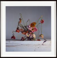 Live and dead poppies by Richard Learoyd contemporary artwork photography