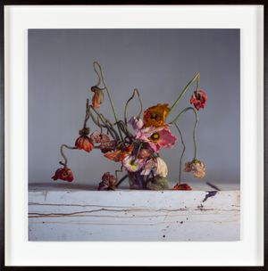 Live and dead poppies by Richard Learoyd contemporary artwork