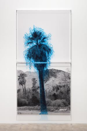 Numbers and Trees: Palm Canyon, Palm Trees Series 2, Tree #1, Cahuilla by Charles Gaines contemporary artwork