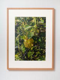 A Ruse (v) detail 2 by Shaun Waugh contemporary artwork print