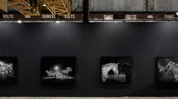 Contemporary art exhibition, Amos Gebhardt, Night Horse at Tolarno Galleries, Melbourne