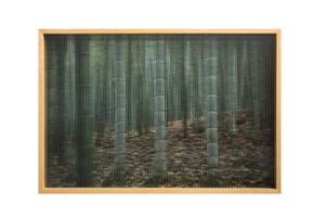 Three Special Bamboo 三棵特別的竹子 by Zhang Liaoyuan contemporary artwork